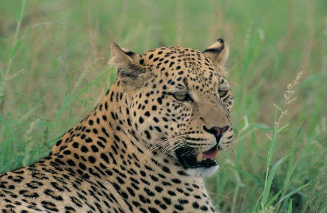 Kruger National Park Safari Drives